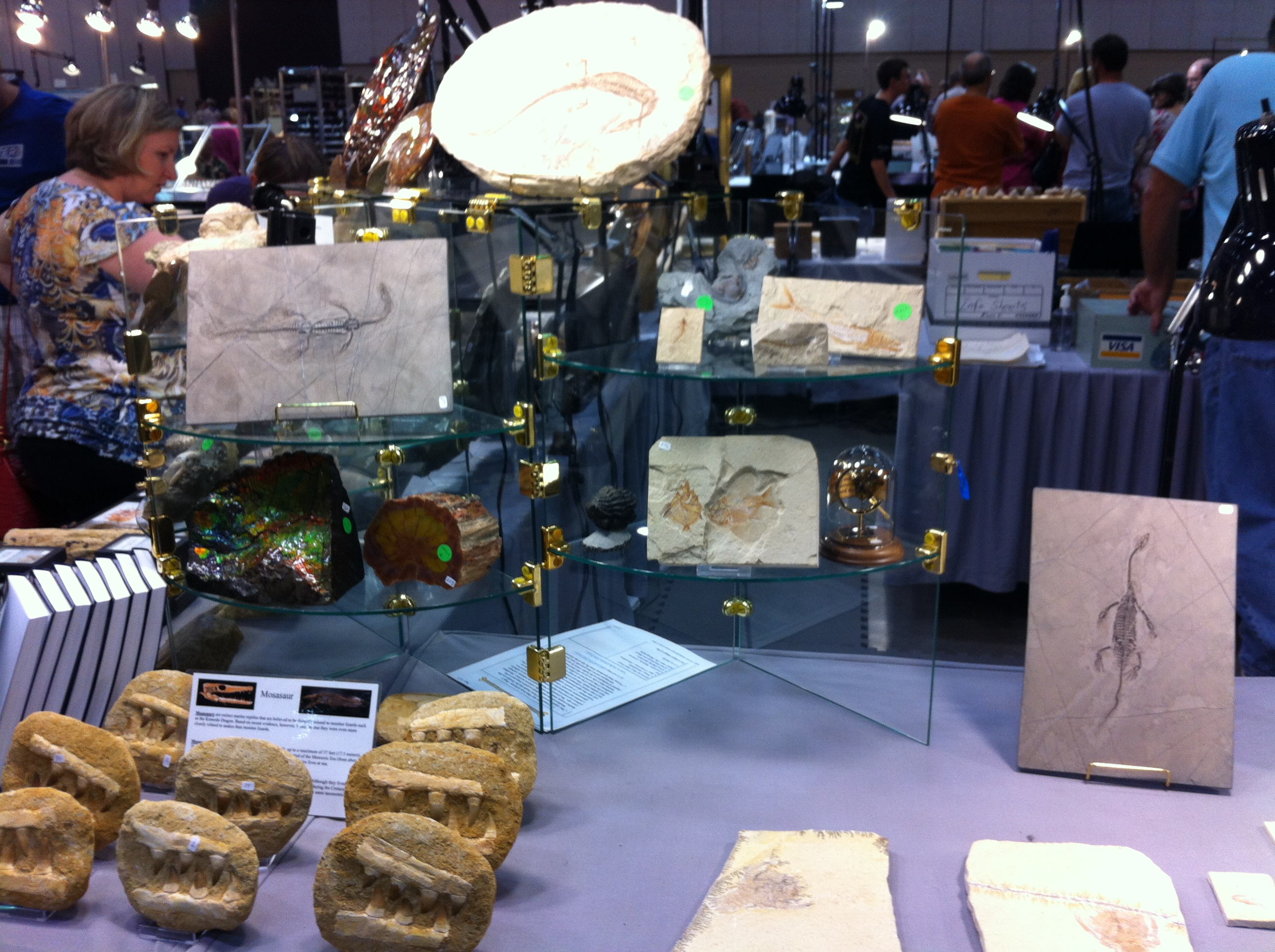Fossils at the Huntsville Gem, Jewelry, and Mineral Show